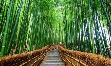 arashiyama traveling