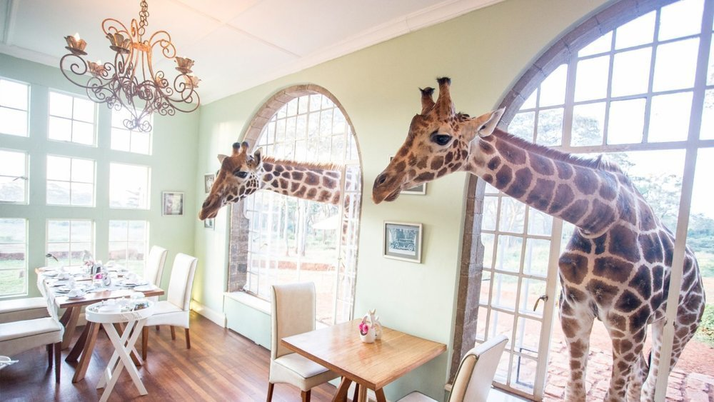 Ellen revealed how she was ecstatic to see giraffes and humans co-exist in that hotel without destroying the animal's natural habitat.
