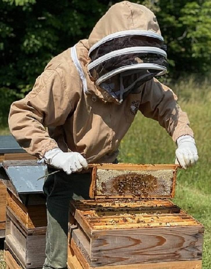 kate-brother-beekeeper-3